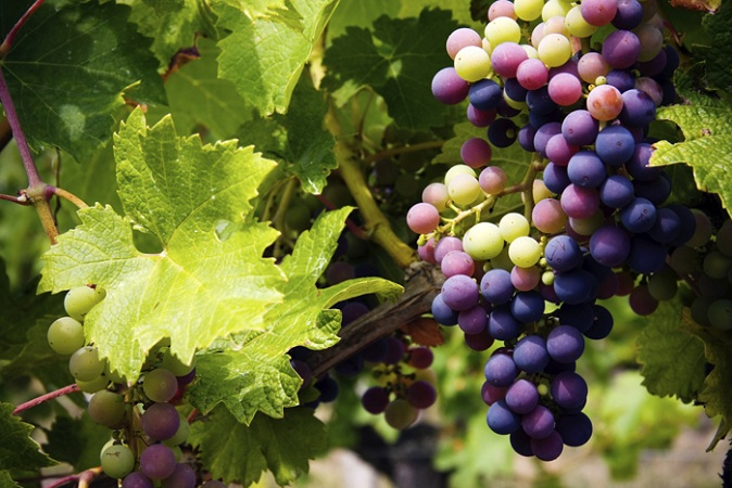 Grapes For Glowing Skin